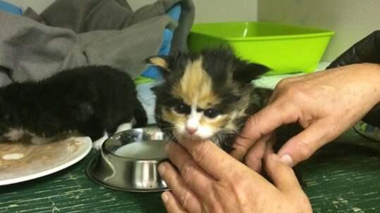 De tre kattungarna hittades dumpade i ett dike i skogen. Foto: Kattfotens katthem