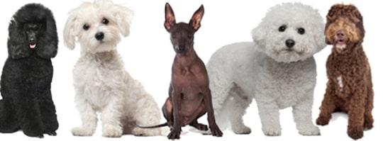Prosit Vill Du Skaffa Hund Trots Allergi Husdjur Expressen