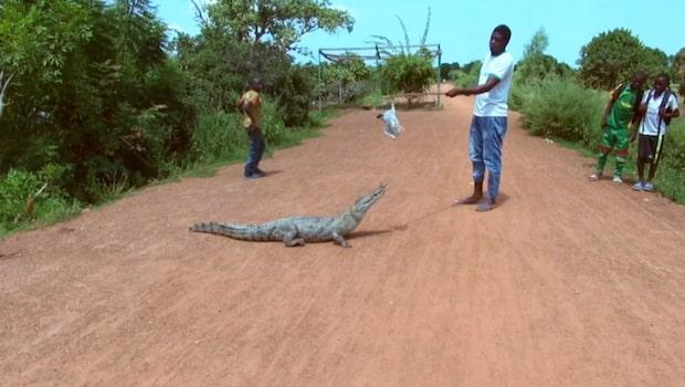 Byn där krokodiler och människor lever tillsammans