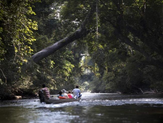 Utflykt på floden Sungai Tahan i Taman Negara. Uppströms väntar bad i vattenfallet Lata Berkoh.