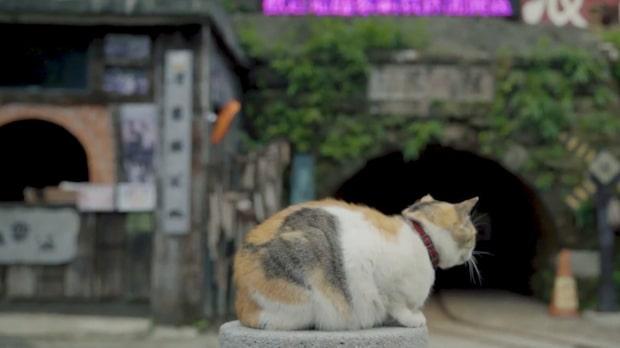 """Besök """"Kattstaden"""" i Taiwan – fler katter än männiksor som invånare"""