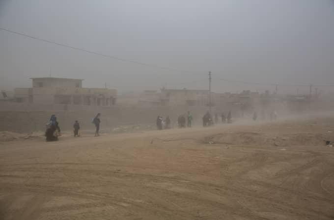 Invånarna i Mosul som vill lämna staden har uppmanats av irakiska armén att bära en vit flagga. Foto: Niclas Hammarström