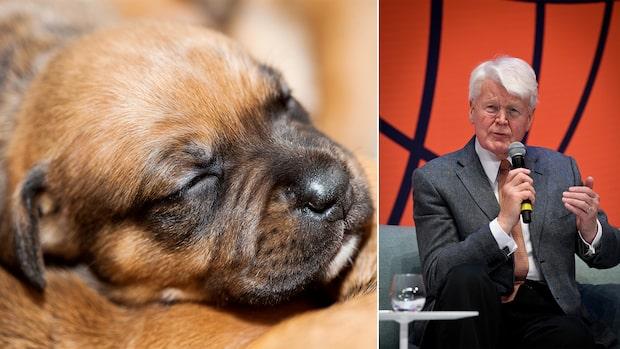 Islands president klonade sitt husdjur