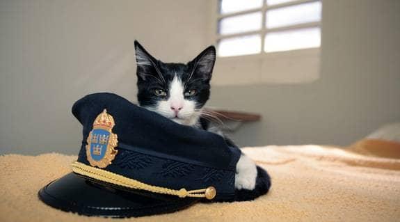 """""""En av de trevligaste fångarna vi haft"""". Så beskriver polisen katten som hamnade i fyllecell. Foto: Mats Endermark"""