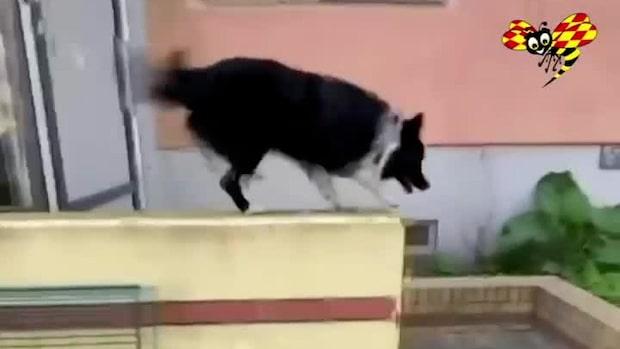Kolla in grymma trixen      parkourhunden fixar