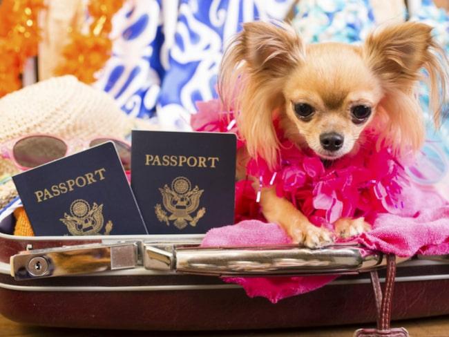 <span>Veterinärintyg eller EU-pass? Vad behöver din hund?</span>