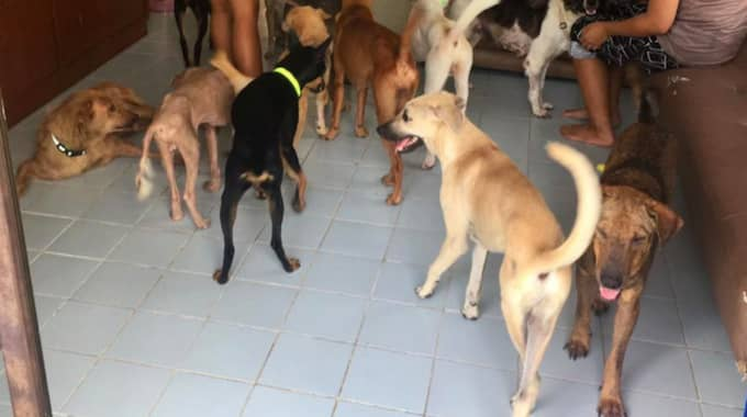 Facebook: Michael, the man who adopted to 80 rescued dogs ... - LaRepública.pe 1