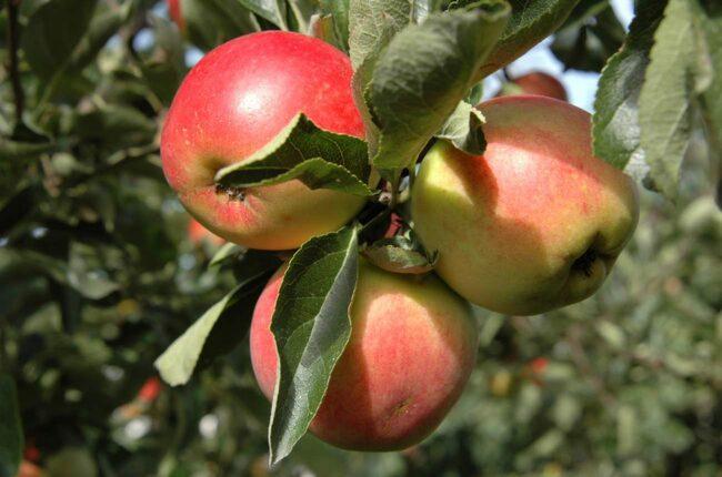 Palla frukt i stället för att handla i butik! Ja, det finns från vilka det är tillåtet. Kolla om grannarna har överflödig frukt, eller kolla pallafrukt.se.