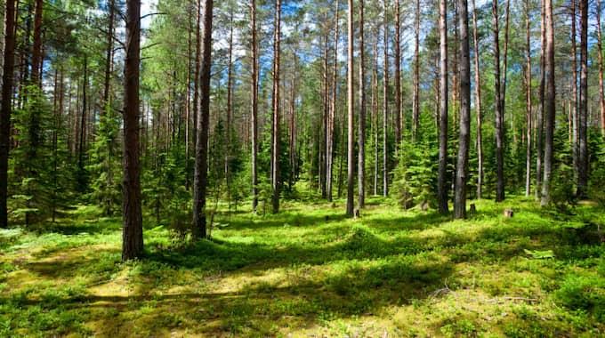 Håll ut i aprilkylan - i maj kommer värmen och även juni och juli ser lovande ut. Foto: Dmitry Naumov / DMITRY NAUMOV