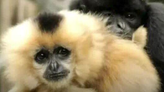 30 apor dog –två kvinnor gripna