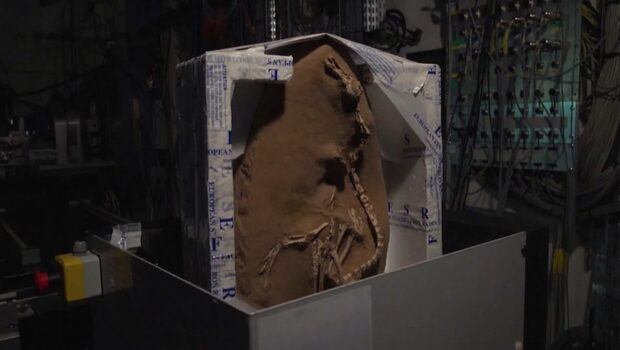 Nyupptäckt dinosaurie ser ut som... en konstig blandning