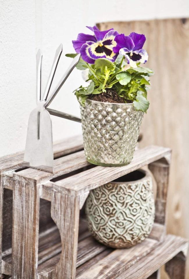 Penséer är små plantor som du kan stoppa i fina glas eller minsta krukorna. Glaskruka 50 kronor, grön mönstrad kruka, 50 kronor, båda från Blomsterlandet.