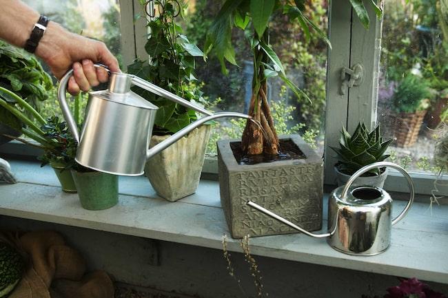 Ska du åka på semester och är orolig för dina blommor och växter? LEVA&BO har samlat de bästa tipsen för krukväxter och trädgårdsväxter.
