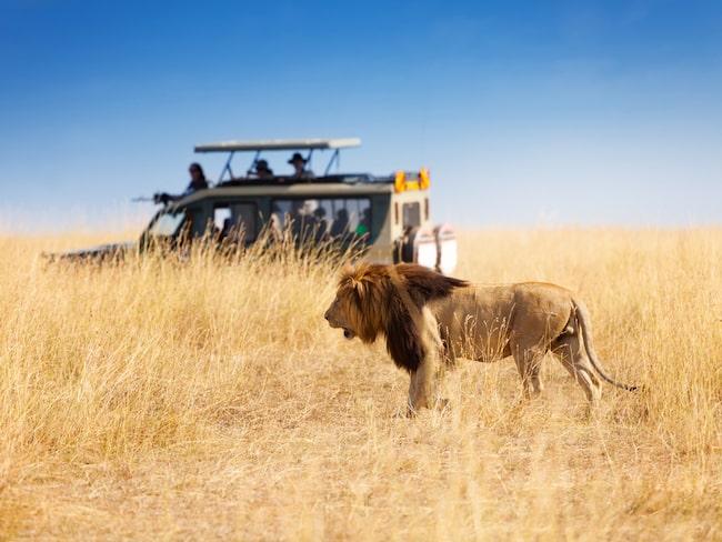 Medan de flesta andra som besöker landet har sikte på naturen och de exotiska djur som lever där.