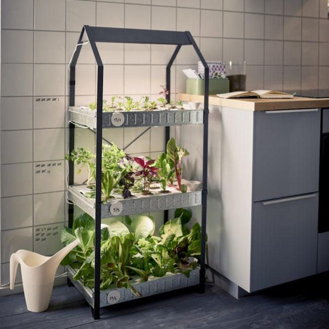 odla växter inomhus