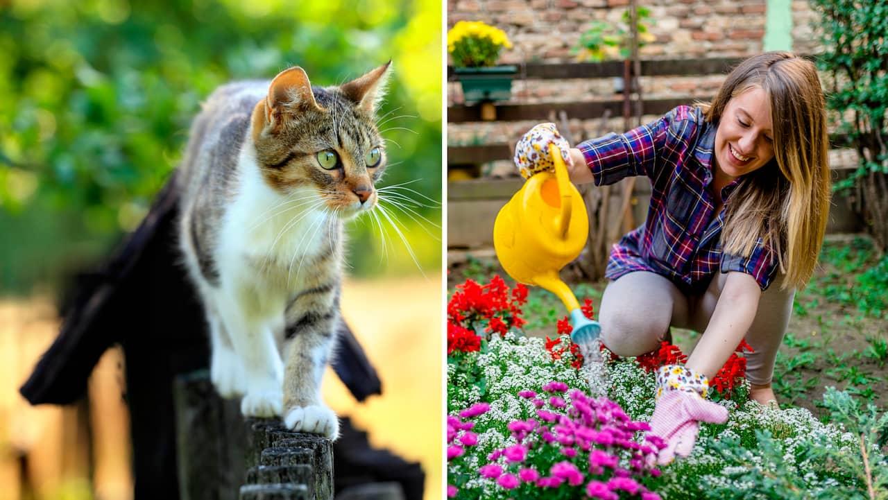 hur bli av med katter på tomten