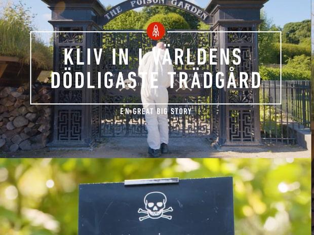 Gå in till mördarväxterna – på egen risk....