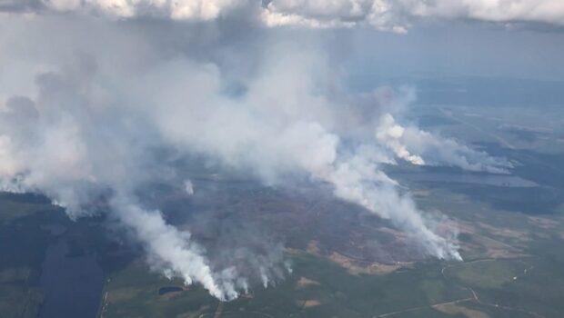 Lotta Gröning om skogsbränderna: Det måste in mer resurser