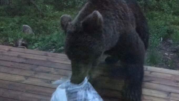 Juho Liikanen överraskades i stugan av en ung björn som sniffat sig fram till en soppåse på terrassen. Foto: Privat