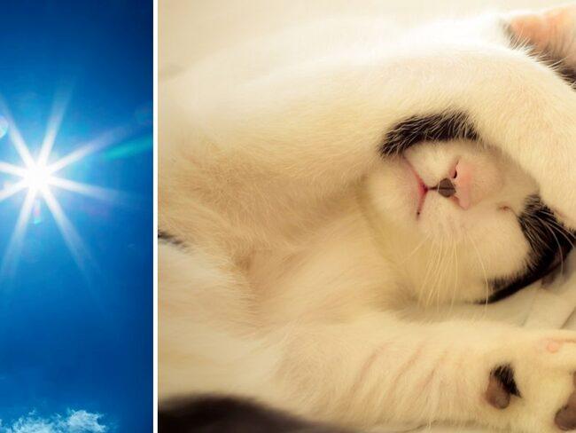 Även katter kan få värmeslag