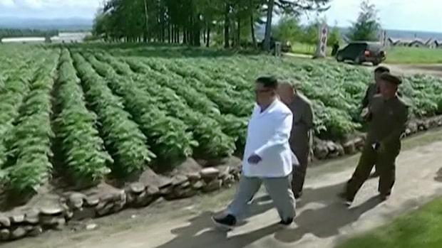 Nordkorea: Halva befolkningen undernärda enligt ny FN-rapport