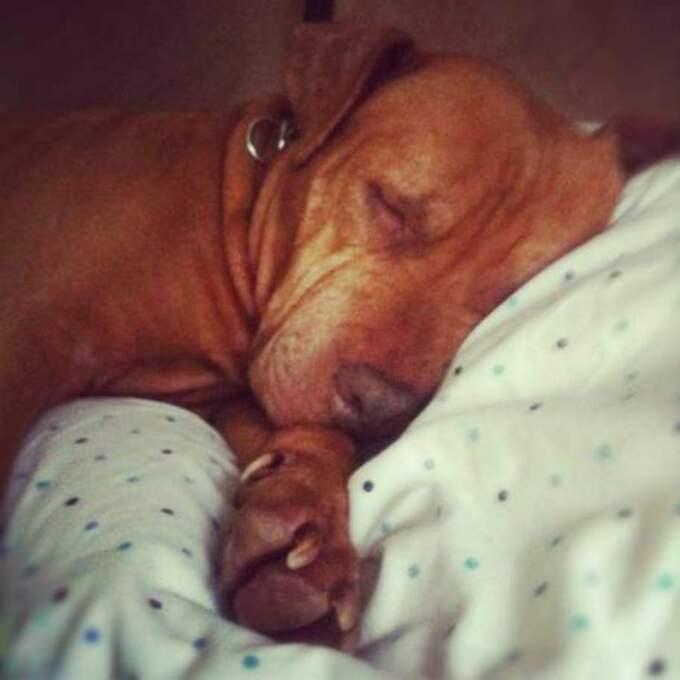 Medan Cathys ägare skrev brevet låg hunden och sov nöjd intill.