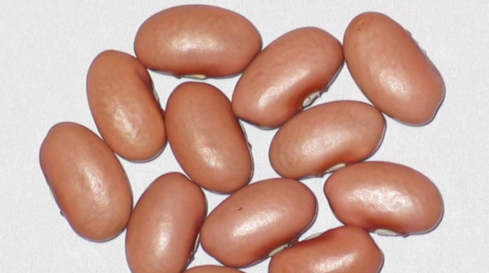 vita bönor nyttigt