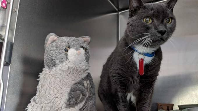 Hoonie med sitt älskade gosedjur. Foto: Alley Cat Rescue via the Dodo