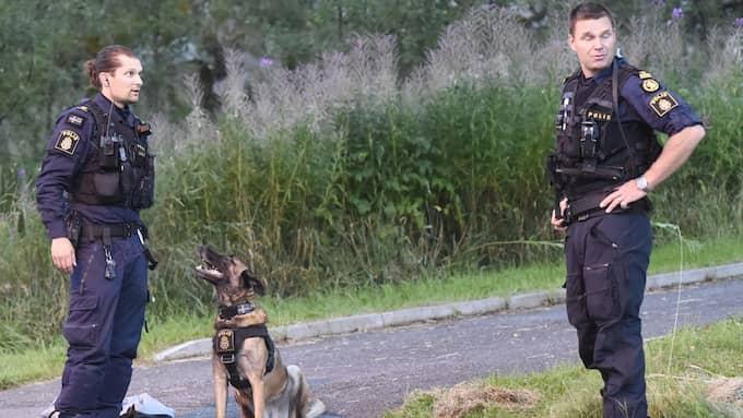 Hundpatruller deltar i jakten på mördaren. Foto: JOAKIM ERIKSSON