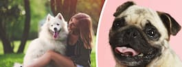 Forskning: Så manipuleras du av din hund