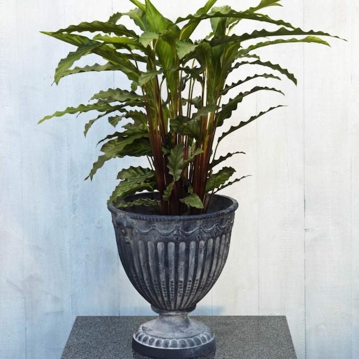 växter som trivs i skugga inomhus