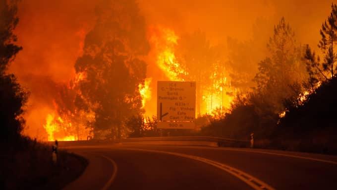 Minst 57 personer har dött i en svårkontrollerad skogsbrand i Portugal. Foto: PAULO CUNHA / EPA / TT / EPA TT NYHETSBYRÅN