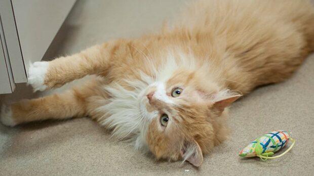 Familjen ville avliva katten Toby när han återvände hem