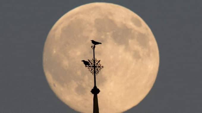 Under fem timmar kommer du kunna se blodmånen skifta färg. Foto: Maurizio Gambarini / Epa / Tt