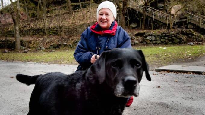 Birgitta Hammar, 73 pensionär, Stockholm, med hunden Tina: Nej, jag sparar jämt och har bara lampan tänd i det rum jag är. Jag tänker på naturen och därför gör jag ingenting extra. Foto: Hampus Hagstedt