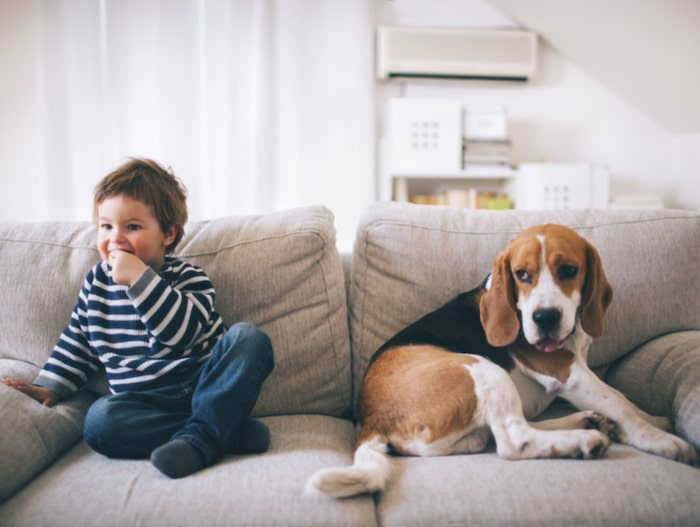 Gifter i hemmet – så slipper du de 8 vanligaste  fdf7fb7fbbd30