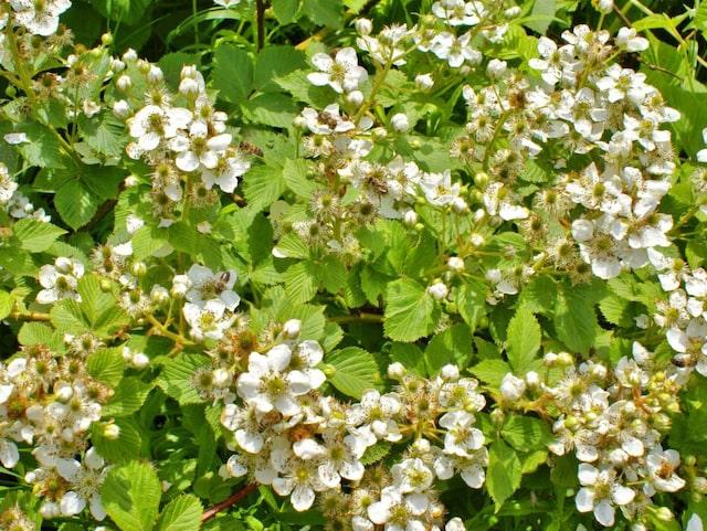 blommande buskar i sol