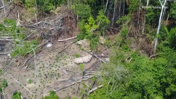 Drönare filmade tidigare okänd stam i Amazonas