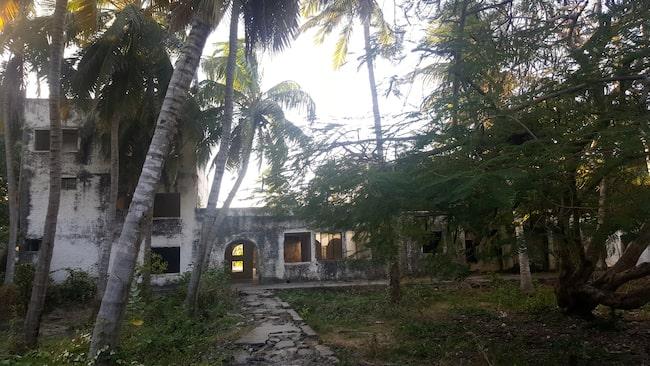 Ruinerna av det som en gång var en palatsliknande byggnad göms bland palmerna.
