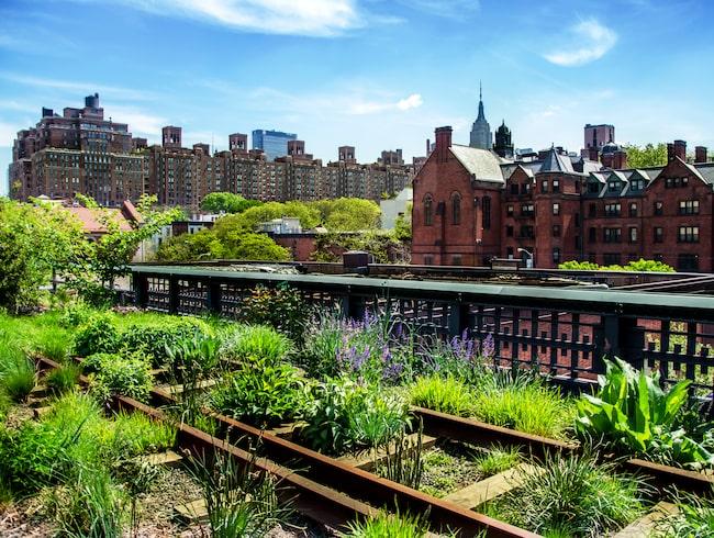 The High Line – en nedlagd järnväg som i dag är ombyggd till park.