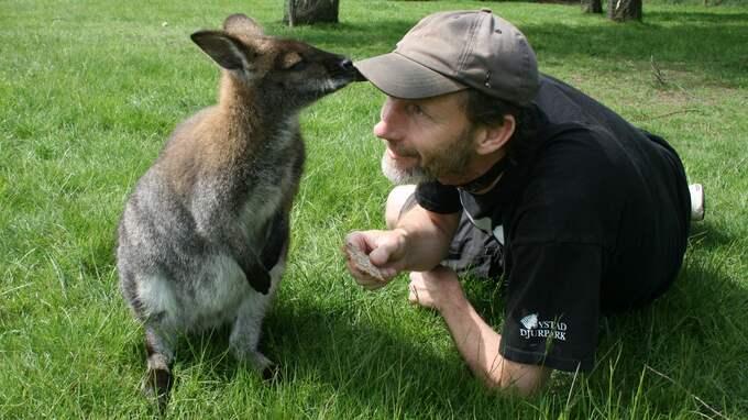 """Zoologen Jep Agrell tillsammans med vallabyn """"Walter"""" på Ystad djurpark. Foto: Ystad djurpark"""