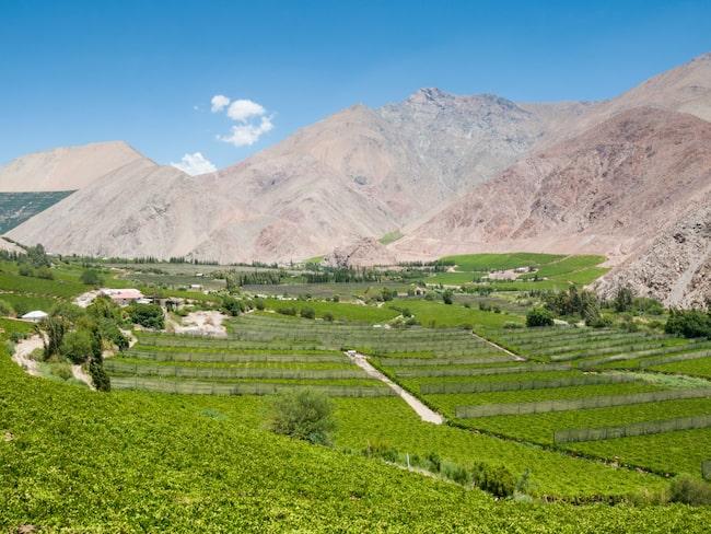 Den chilenska vinregionen i Atacamaöknen håller på att bli världsledande inom astronomi- och astro-turism.