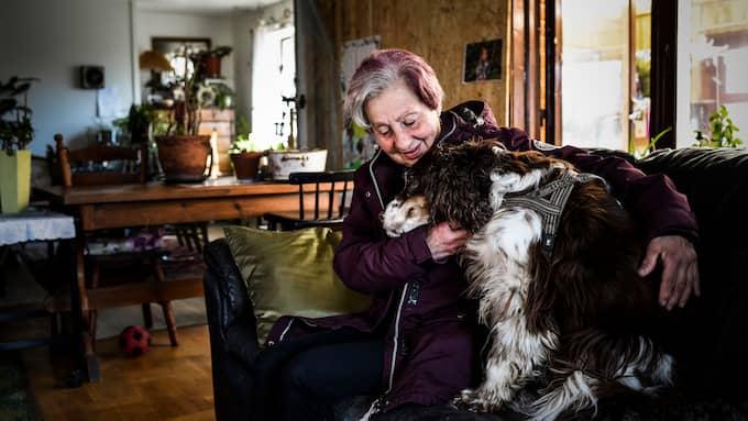 Den tolvåriga och döva springer spanieln Tass är tillsammans med katten högsta prio. Foto: JENS CHRISTIAN/KVP