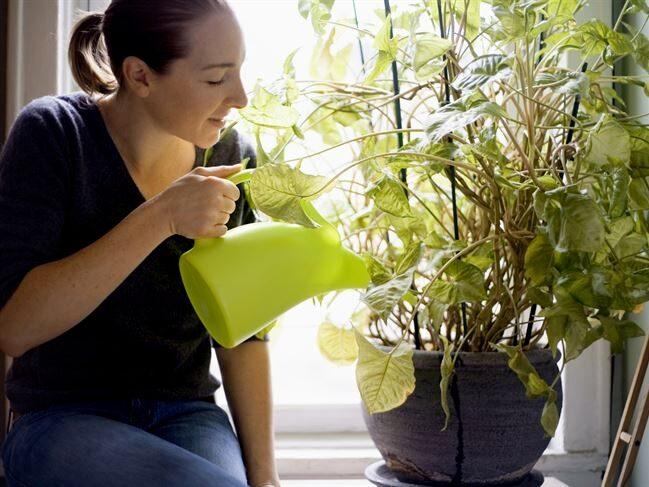 Undrar du varför dina växter dör utan anledning? Det har inte alltid med avsaknad av gröna fingrar att göra.