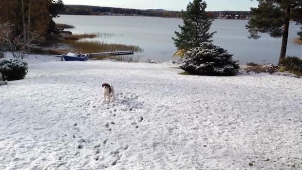 Varning för halka efter snöfall – kyligare luft över Sverige