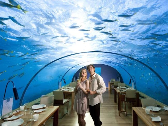 Som ett inverterat akvarium, så  brukar undervattensrestaurangen Ithaa beskrivas som ska vara världens första i sitt slag.