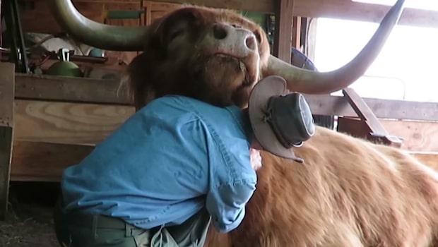 Här är kossan som vet vikten av en fin frisyr!