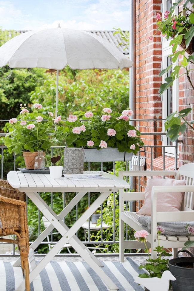 Förgyll din uteplats med vackra pelargoner.