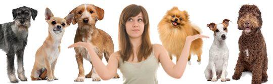 Dags att skaffa hund? Välj en ras utifrån sin och familjens livsstil.