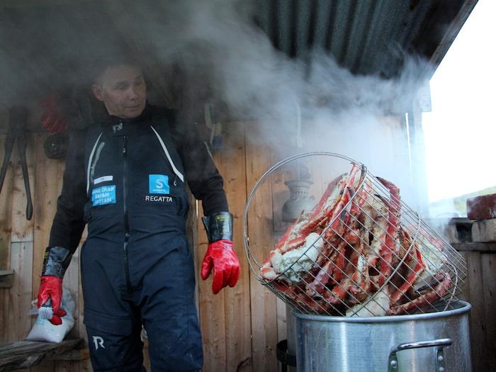 Kungskrabborna kokas med 51 gram salt. En krabba räcker till minst två personer.